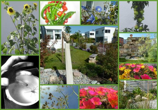 sonnenblumen vorziehen sonnenblumen noch auss en anbau s mereien garten sonnenblumen im gew. Black Bedroom Furniture Sets. Home Design Ideas