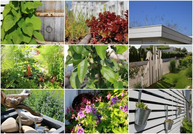 2013-06-01 Garten im Juni