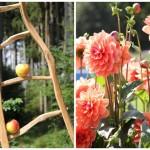 2014-09-06 Gartenlust Illertissen