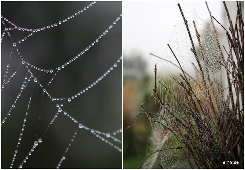 Spinnweben im Nebel