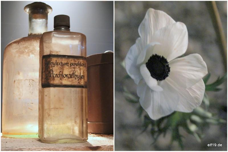 Im Reigen der begehbaren Bilder Blumen Weimar